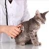 Ветеринарные клиники в Жердевке